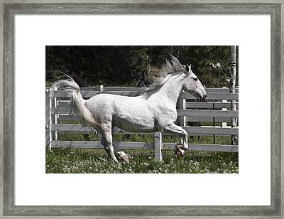 Maestoso Aurorra Framed Print by Wes and Dotty Weber