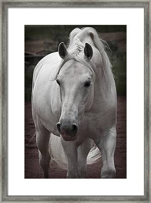 Maestoso II Ambrosia Framed Print by Wes and Dotty Weber