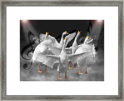 Maestro Framed Print by Steven Michael
