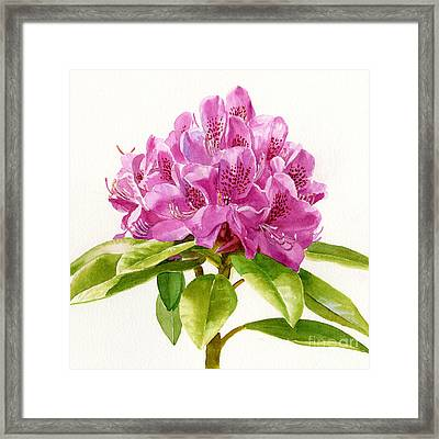 Magenta Colored Rhododendron Square Design Framed Print by Sharon Freeman