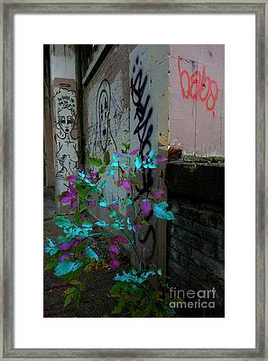 Magenta Cyan And Babs Framed Print by Jacqueline Athmann