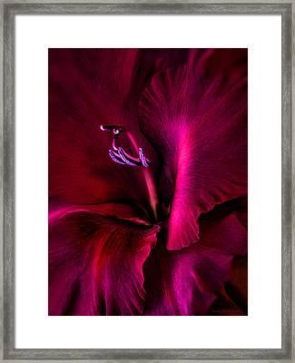 Magenta Gladiola Flower Framed Print by Jennie Marie Schell