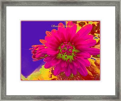 Magenta Greetings Framed Print by Sonali Gangane