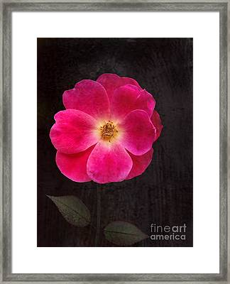 Framed Print featuring the photograph Magenta Mood by Kathi Mirto