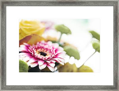 Magenta Splash Framed Print