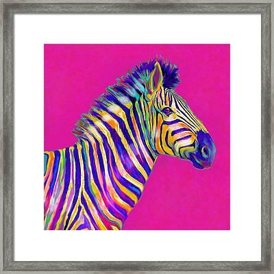 Magenta Zebra Framed Print by Jane Schnetlage