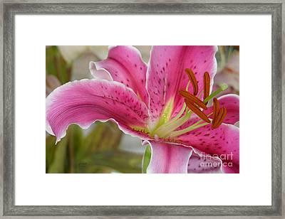 Magenta Tiger Lily Framed Print