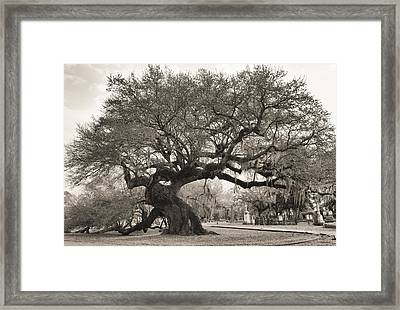 Framed Print featuring the photograph Magestic And Aged by Phyllis Peterson