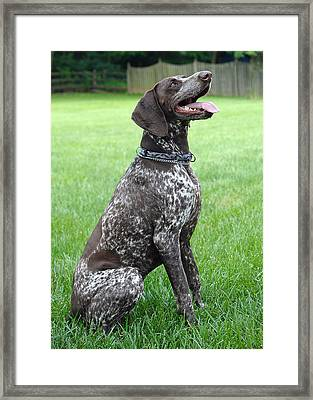 Framed Print featuring the photograph Maggie by Lisa Phillips