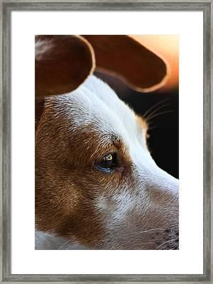 Maggie May Framed Print by Mark Alder