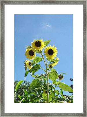 Magic Beans Framed Print by Elizabeth Sullivan