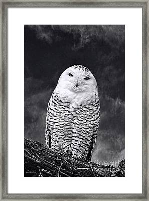 Magic Beauty - Snowy Owl Framed Print