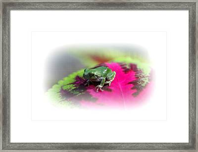 Magic Carpet Coleus Leaf Framed Print