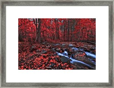 Magic Forest 1 Framed Print