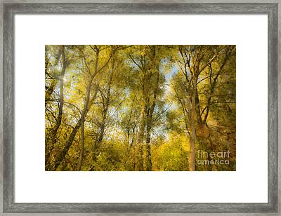 Magic Forest-4 Framed Print