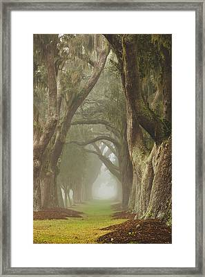 Magic Forest Framed Print by Barbara Northrup