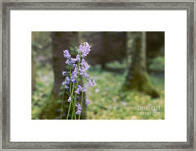 Magic Forest Framed Print by Jevgenija Kokoreva