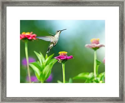 Magic Garden Framed Print