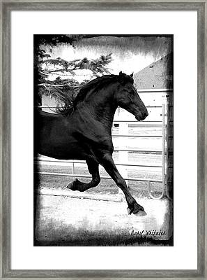 Magic Light Framed Print by Royal Grove Fine Art