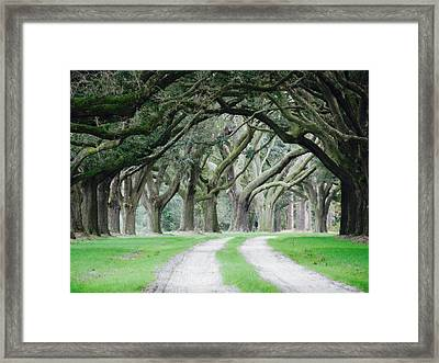 Magic Live Oaks Framed Print by Patricia Greer