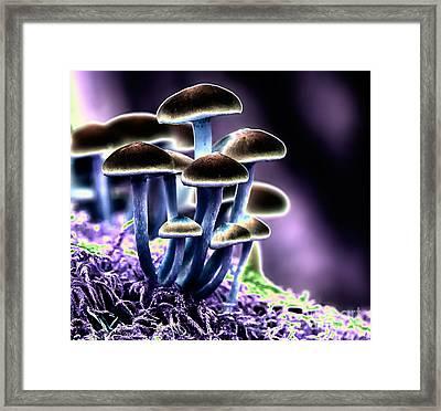 Magic Mushrooms Framed Print