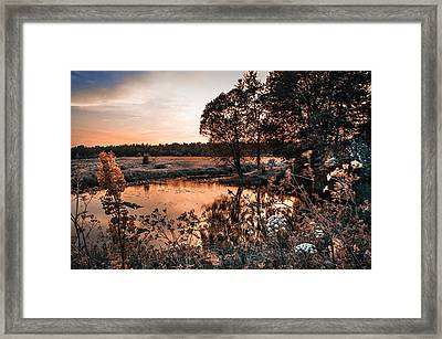 Magic Of Changes. Nature In Alien Skin Framed Print by Jenny Rainbow