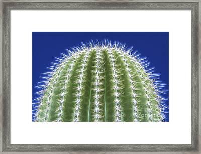 Magic Of The Saguaro Framed Print