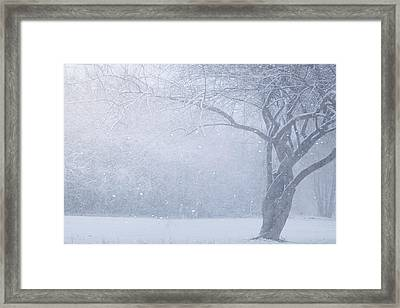 Magic Of The Season Framed Print by Carrie Ann Grippo-Pike