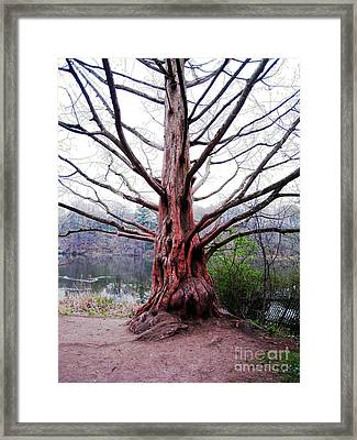 Framed Print featuring the photograph Magic Tree by Nina Silver