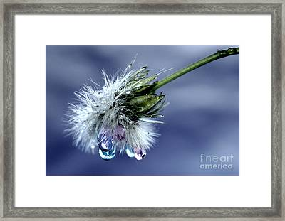 Magic Wand Of Wishes Framed Print by Krissy Katsimbras