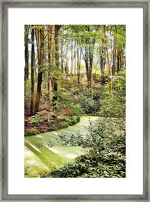 Magic World Of Botanic Gardens Framed Print