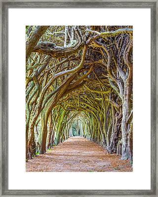 Magic Yew Framed Print