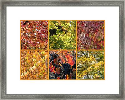 Magical Autumn Colors Collage Framed Print by Carol Groenen