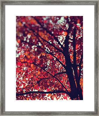 Magical Autumn Framed Print by Kim Fearheiley