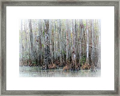 Magical Bayou Framed Print by Carol Groenen
