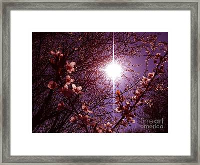 Framed Print featuring the photograph Magical Blossoms by Vicki Spindler
