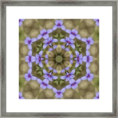 Magical Bluet Wildflower Kaleidoscope Framed Print