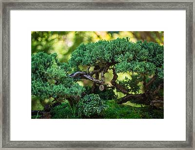 Framed Print featuring the photograph Magical Bonsai by Julie Andel