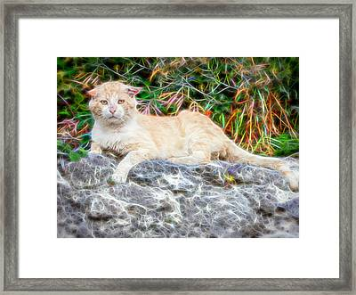 Magical Cat Framed Print