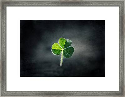 Magical Clover Framed Print by Melanie Lankford Photography