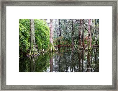 Magical Cypress Swamp Framed Print by Carol Groenen