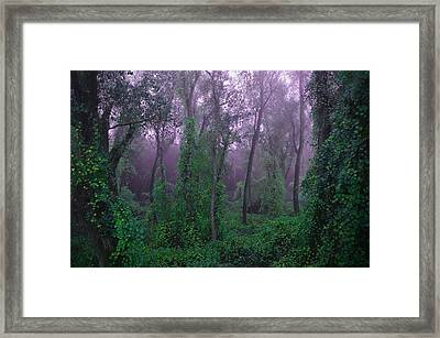 Magical Fairy Forest Framed Print