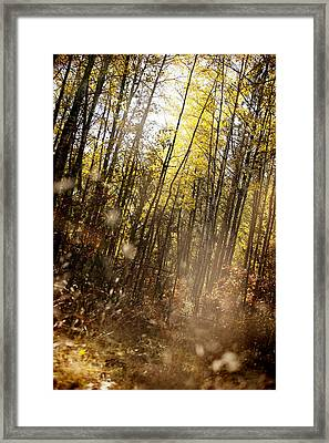 Magical Fall Framed Print