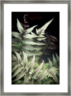 Magical Forest 1 Framed Print