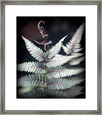 Magical Forest 2 Framed Print by Karen Wiles