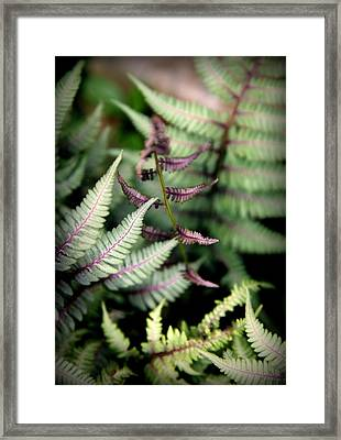 Magical Forest 3 Framed Print by Karen Wiles