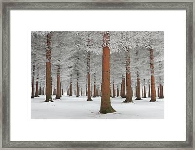 Magical Forest Framed Print