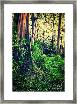 Magical Forest Framed Print by Edward Fielding