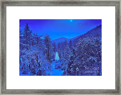 Magical Forest Framed Print by Gem S Visionary