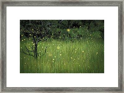 Framed Print featuring the photograph Magical Land by Lana Enderle